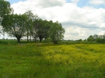 Łąki w Sierzchowie